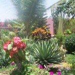 100_5535-300x2251-150x150 Achat et construction de villa au Sénégal dans Pépinière REMY