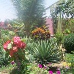 Valoriser votre villa en créant un jardin dans Valoriser votre villa en créant un jardin 100_5535-300x225-150x150